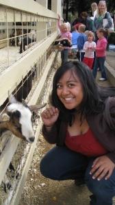 Livestock fun!